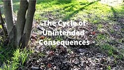 video link image for 2Roses the cycle of unintended consequences